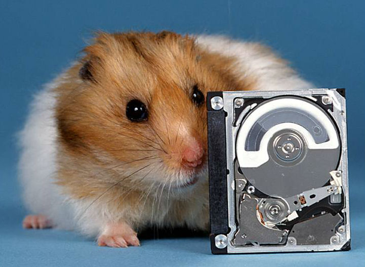 IBM 1-inch diameter Microdrive (1999) compared to a hamster